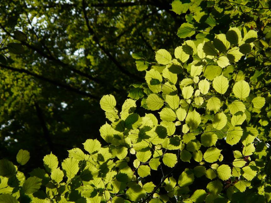 Summer leaves near Annecy Gorges de Fier