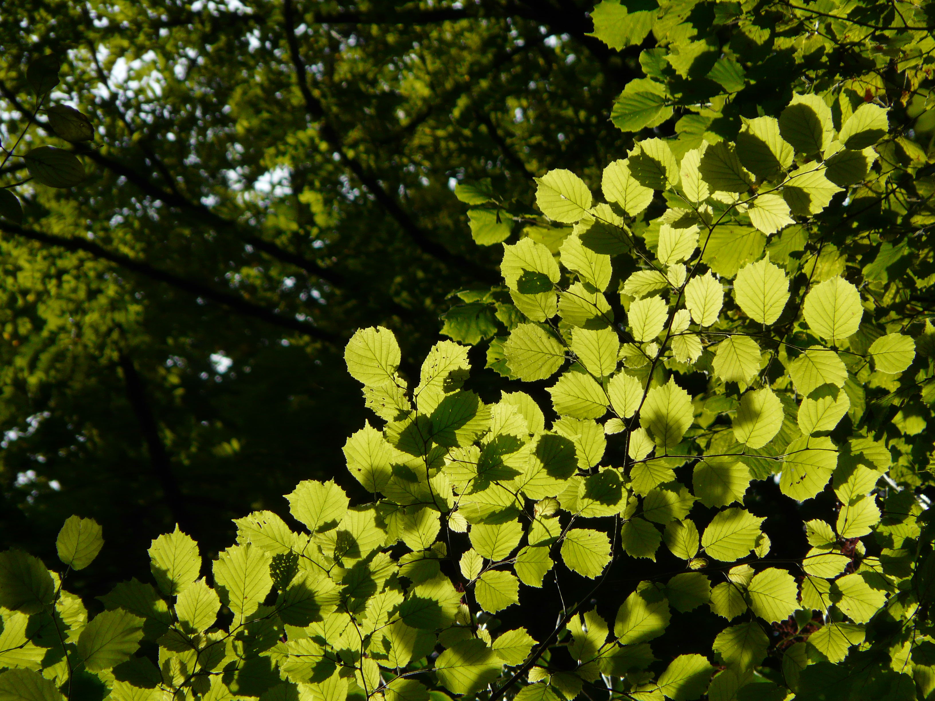 Summer leaves near Annecy Gorges de Fier